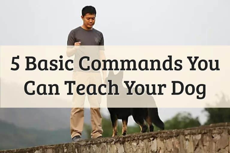 Well Pet - Teach Your Dog Or Puppy The Five Basic Commands Feature Image