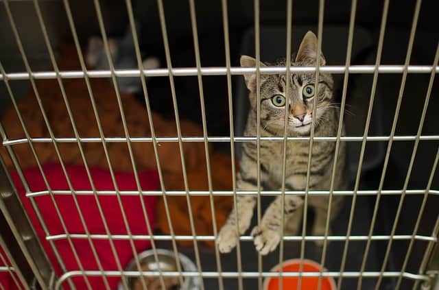 Cat inside a cage