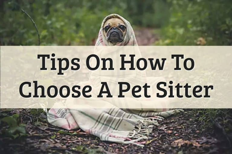 Well Pet - How To Choose The Best Pet Sitter Feature Image