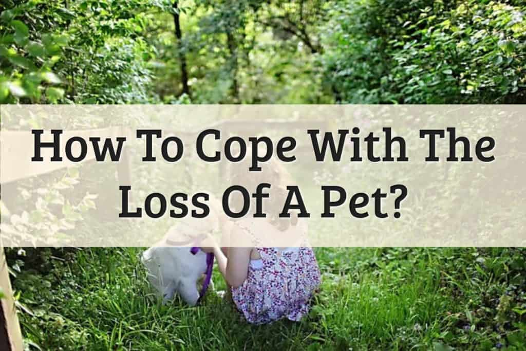 Well Pet - Tips For Coping With The Loss Of A Pet Feature Image