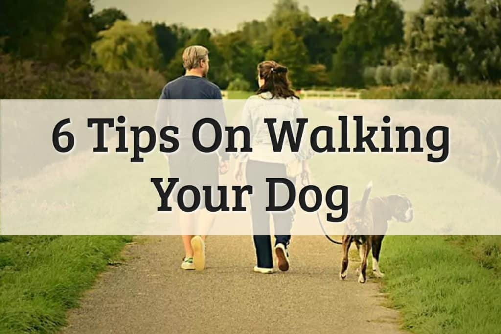 Walking My Dog Feature Image