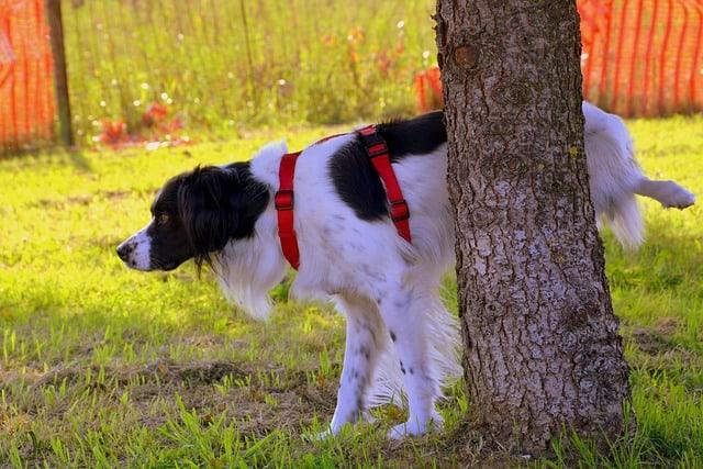 dog peeing next to a tree