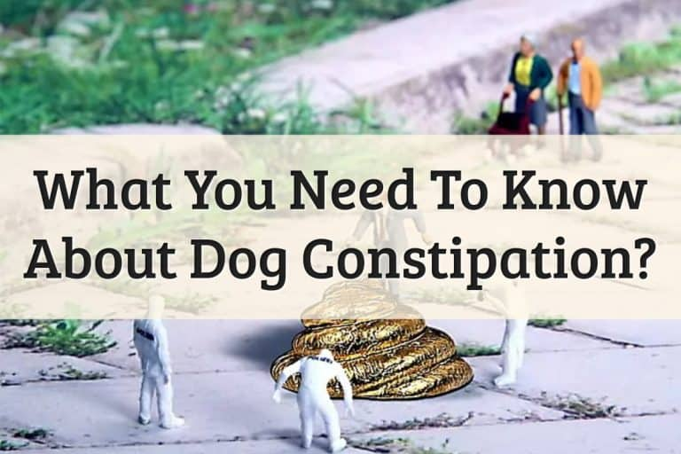 Causes & Treatments For Dog Constipation Feature Image