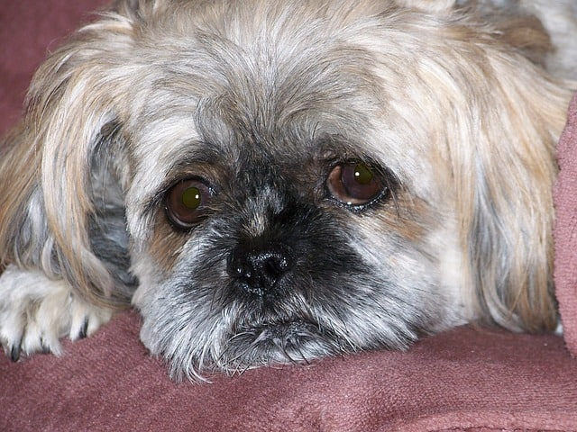 Well Pet - Dog With Upset Stomach 2