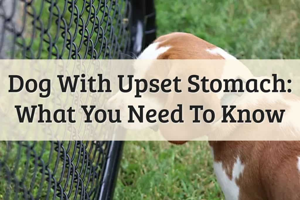 Well Pet - What To Feed A Dog With An Upset Stomach Feature Image