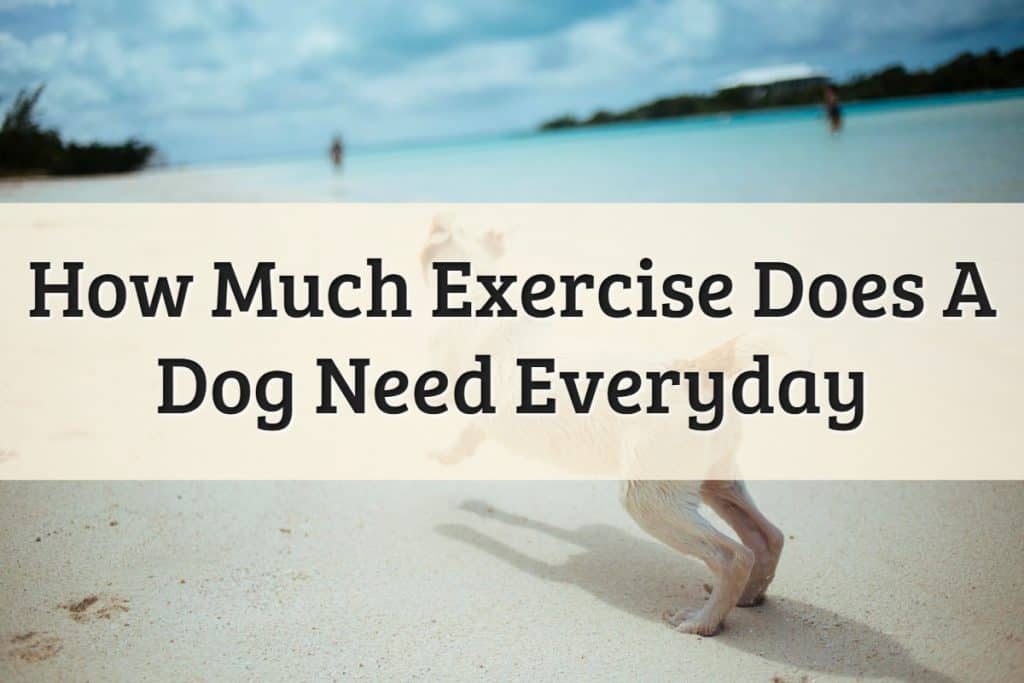 Dog Exercise Featured Image
