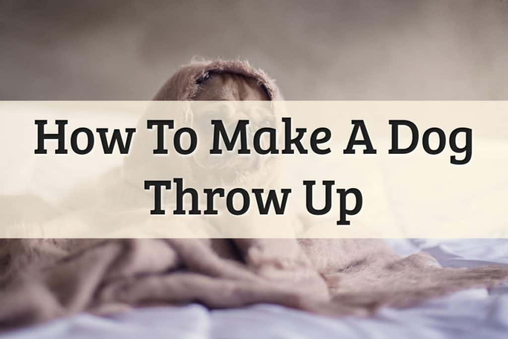 How To Make A Dog Throw Up Feature Image