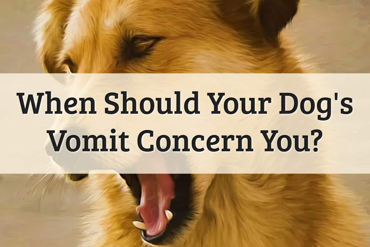 Well Pet - When Should Your Dog's Vomit Concern You Feature Image