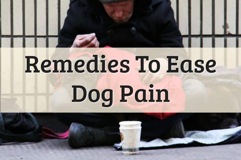 What Can I Give My Dog For Pain Feature Image