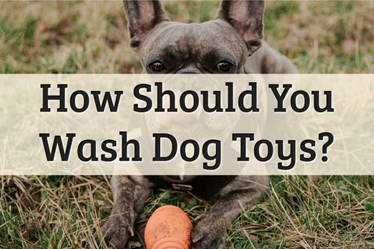 How To Wash Dog Toys Feature Image