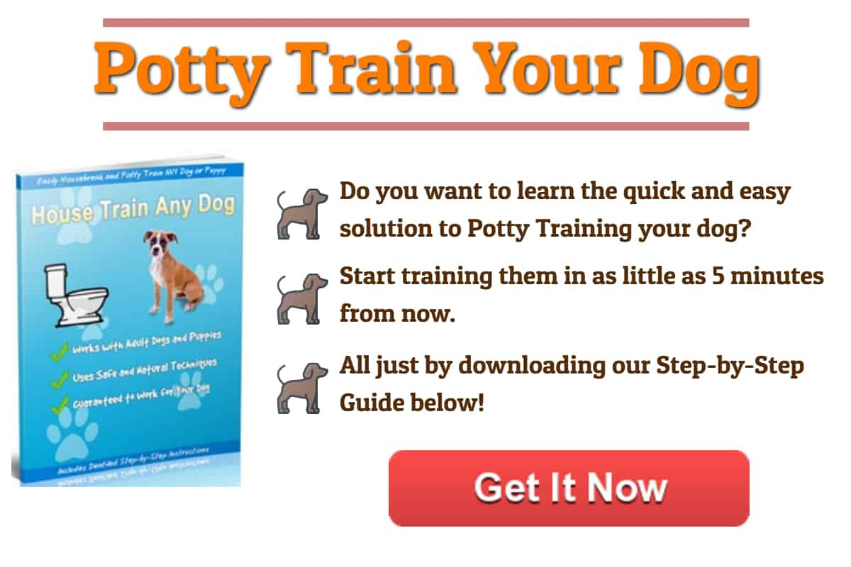Well Pet Banner - Start Potty Training Your Dog Today