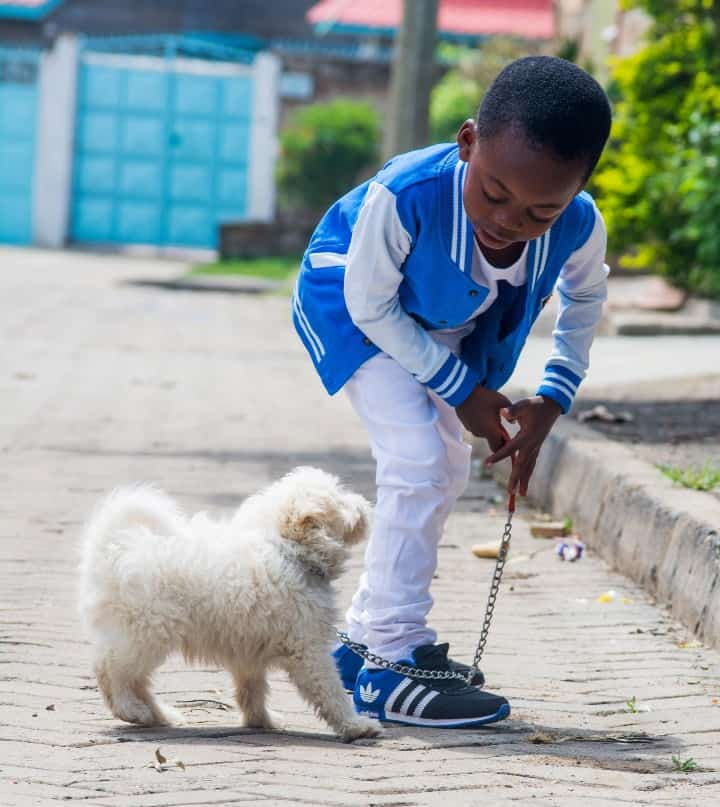 Young boy bringing his dog out for a walk