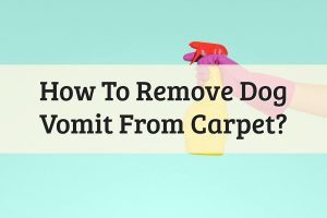 How To Clean Dog Vomit From Carpet Feature Image