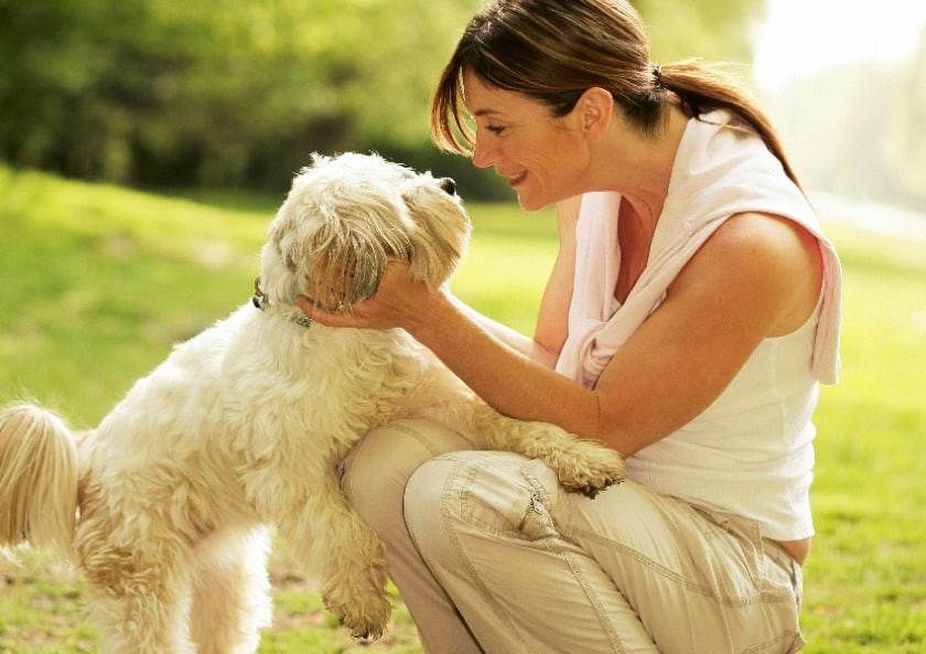 Woman looking at her shih tzu