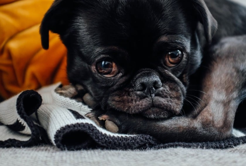 Dog Care- What Can I Give My Dog For Constipation & The Causes
