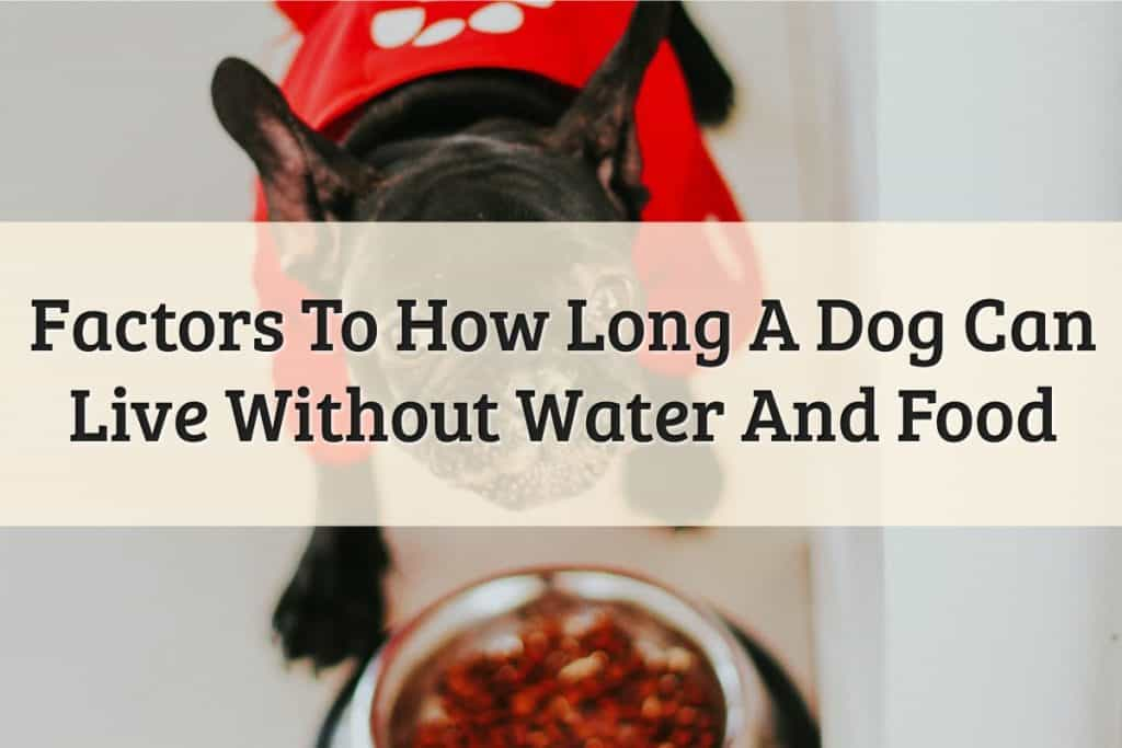 How-Long-Can-Dog-Go-Without-Eating-Feature-Image