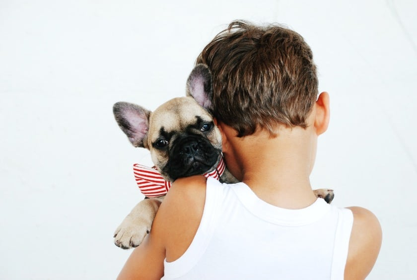 Pet Care: Types Of Things To Do When He Stops Eating Dog Food & What It Means