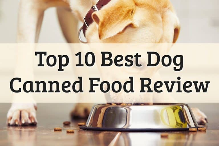 Best Dog Canned Food Feature Image