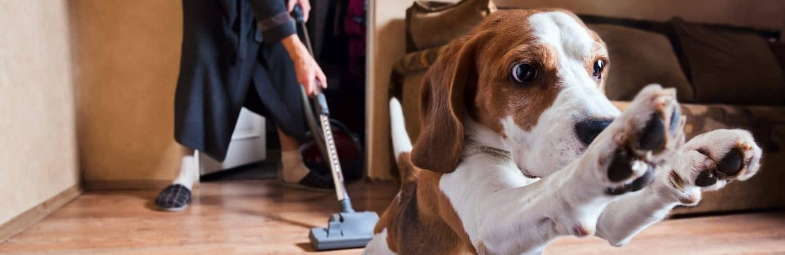 Dog Giving Woman Space While She Vacuums