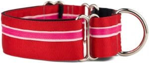 If It Barks Martingale Collar for Dogs