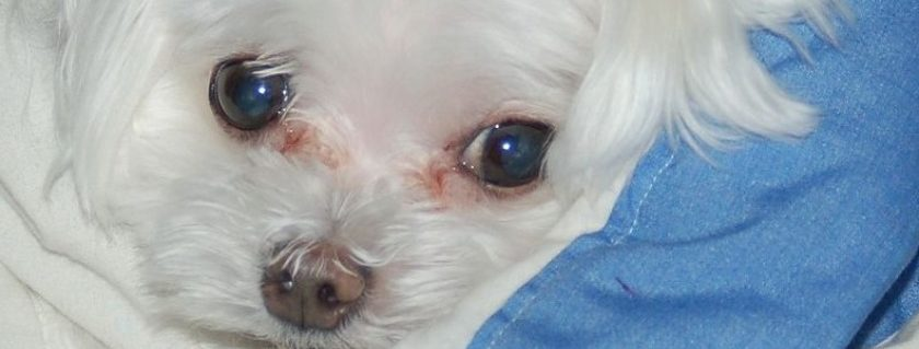 What should pet parents do for such staining on their pet