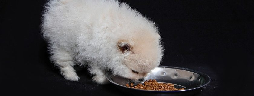 Puppies Owners Guide To Providing Essential Nutrients Catered To Their Development