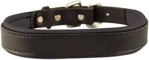 Perris Padded Leather Dog Collars in Metallic and Bold Non Metallic Colors