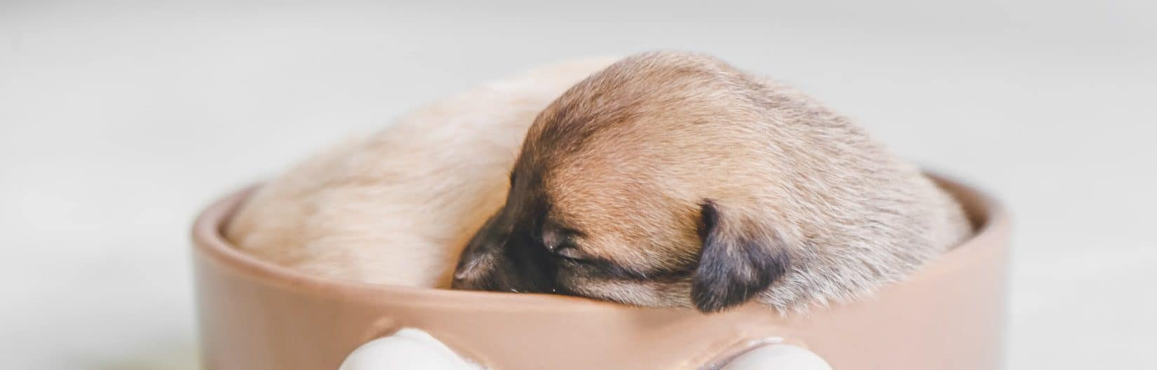 Pup In A Bowl