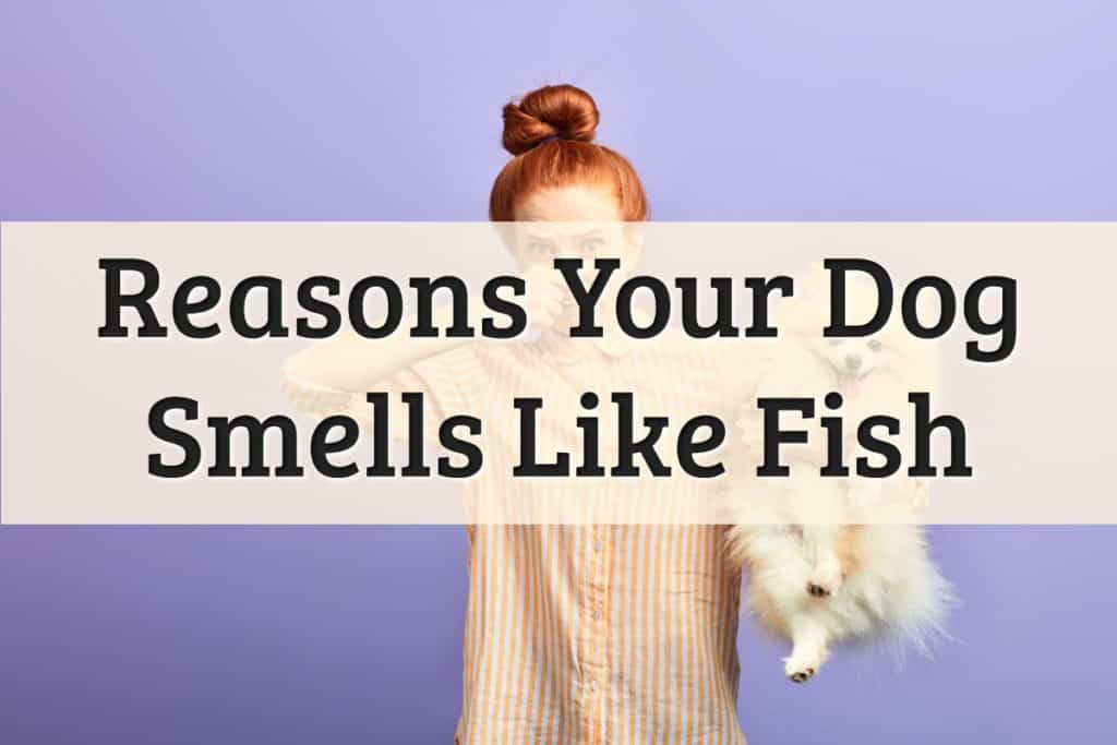 Why Does My Dog Smell Like Fish Feature Image