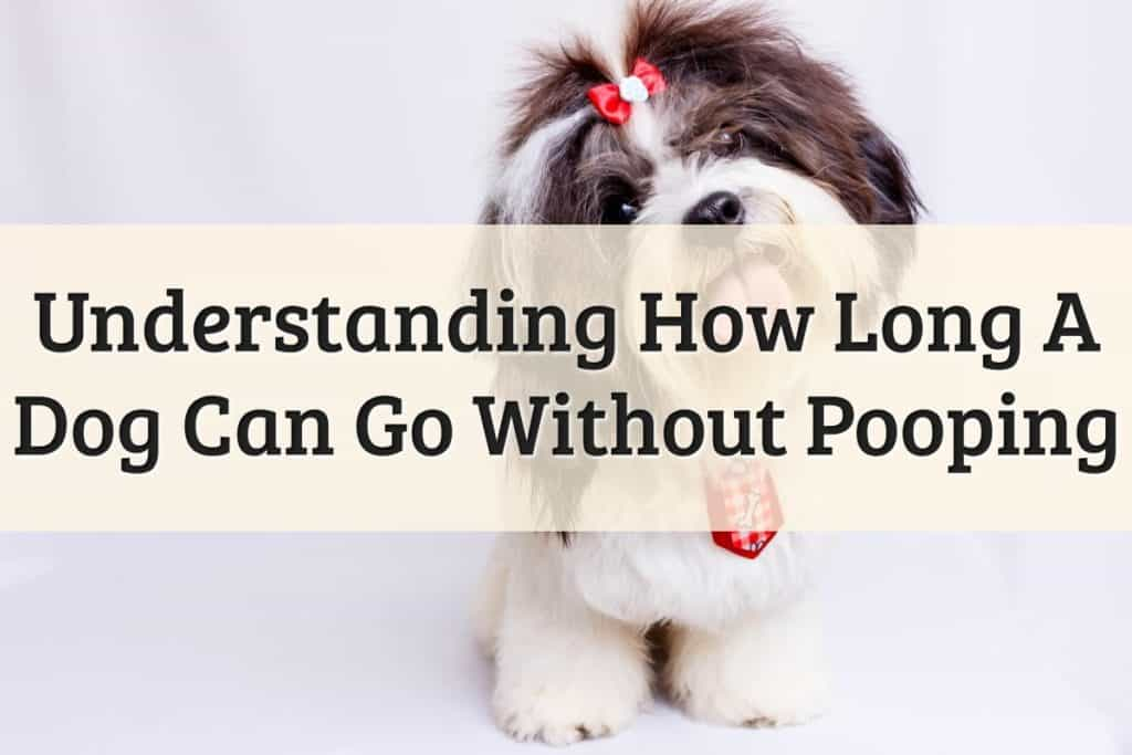 How Long Can A Dog Go Without Pooping Feature Image