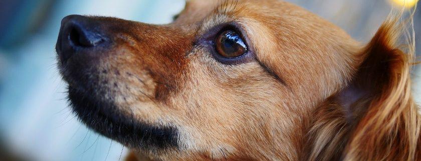 Cute Brown Pup