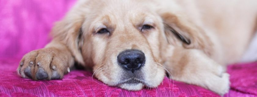 Signs To Look For After Your Pet Have A A Form Of Reflux