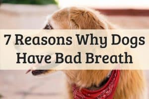 Dog Bad Breath Feature Image