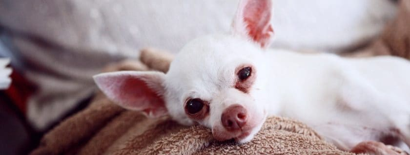 Treatments For Retching Dogs