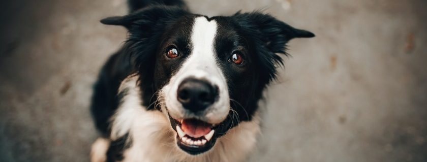 Analysis Of Product Options That Your Dog Needs