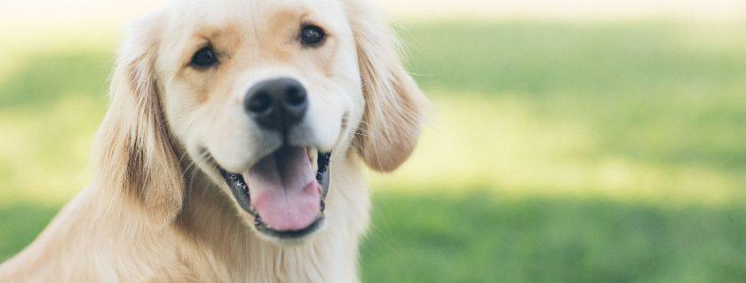 Shaking In Dog - Pet Information