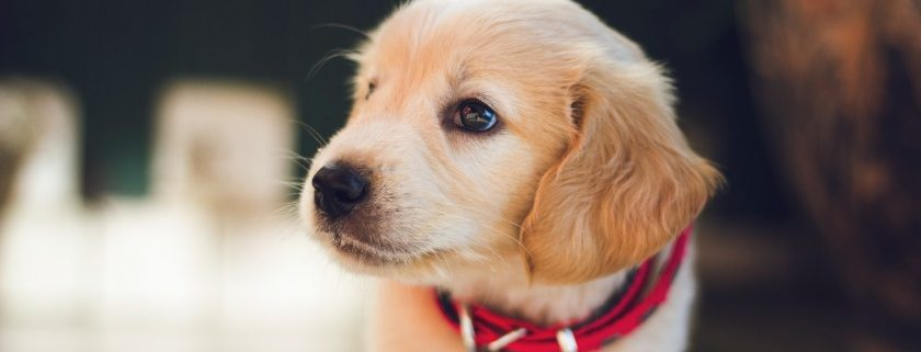 Topics To Consider For Why Dogs Love Poop
