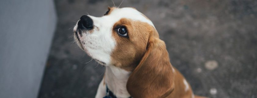 Four Dangers For Dogs And Owners