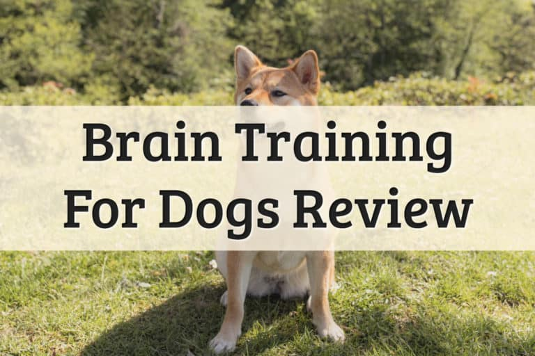 Brain Training For Dogs Review - Feature Image