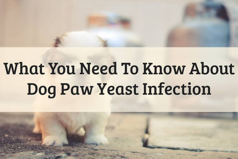 Yeast Infection Dog Paws - Feature Image