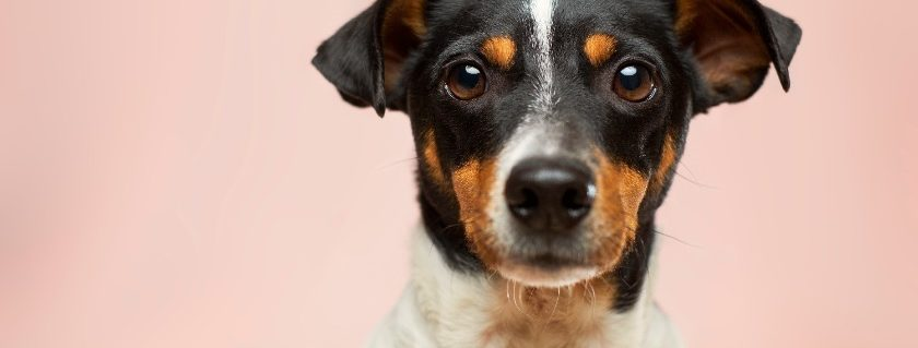 Pet Dog Health Problems And Medications