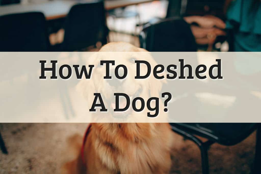 Dog Shedder - De Shedding Dogs Feature Image