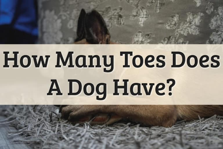how many toes does a dog have Feature Image