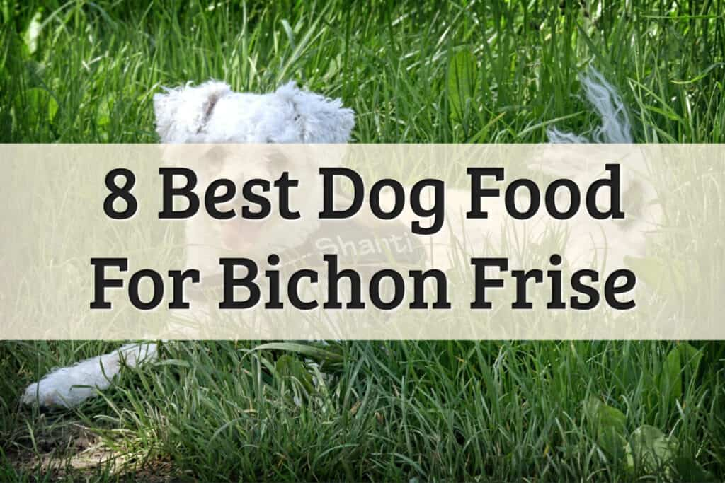 Recommendation Of Bichons Dog Food Feature Image