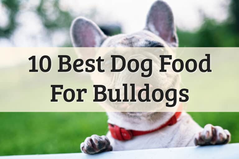 10 Best dog food for bulldogs Feature Image