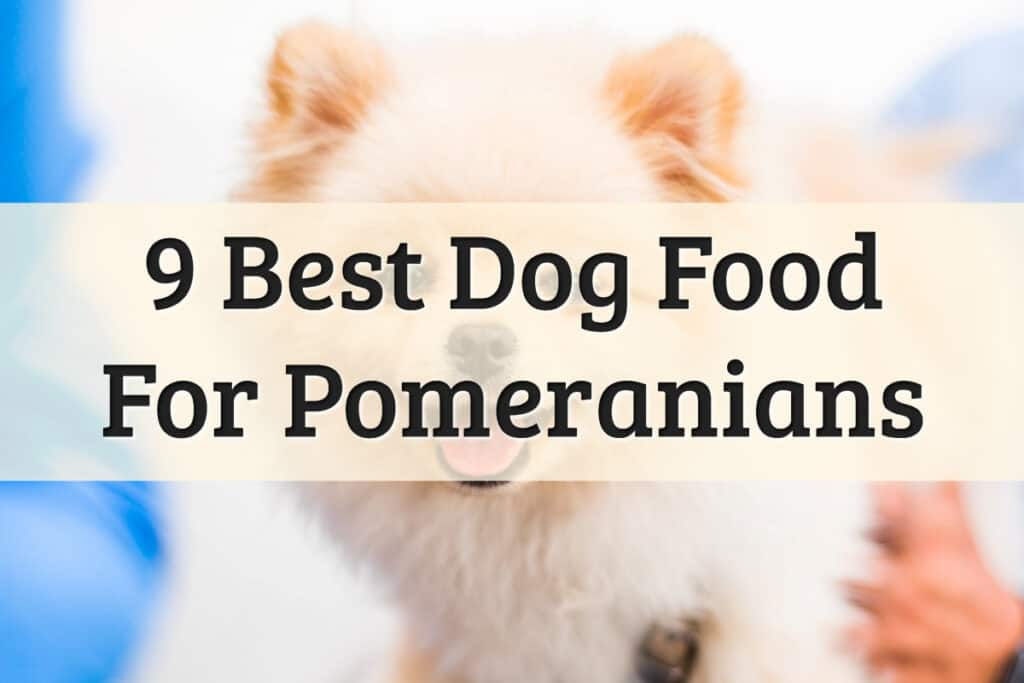Recommendations Of The Best Pomeranian Food Feature Image
