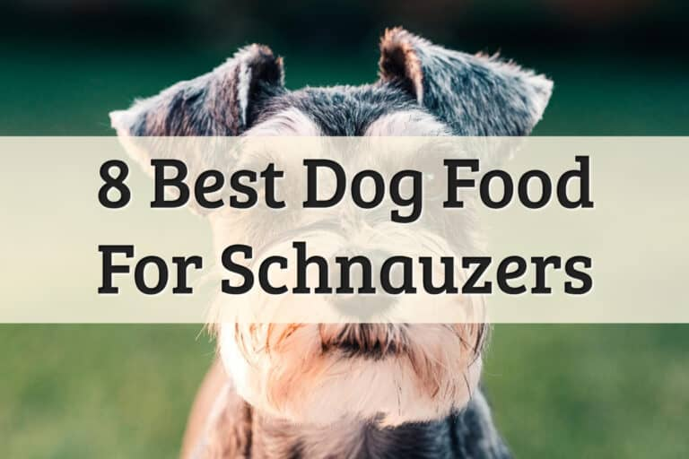 Our Recommendations Of Best Dog Food For Schnauzers Feature Image