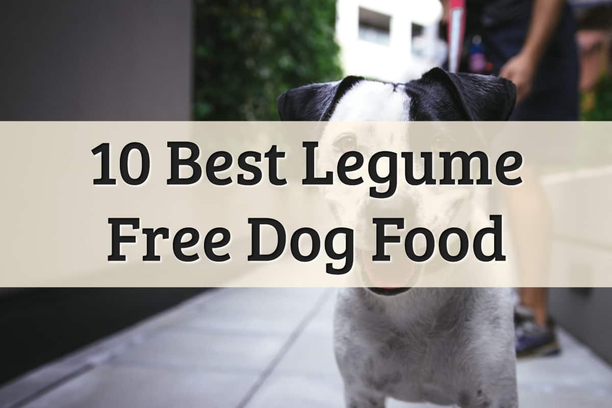 Best Dog Food Without Peas And Legumes Feature Image