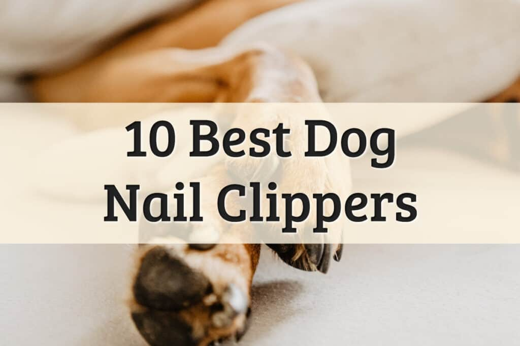 Top 10 Best Dog Nail Clippers Review Feature Image