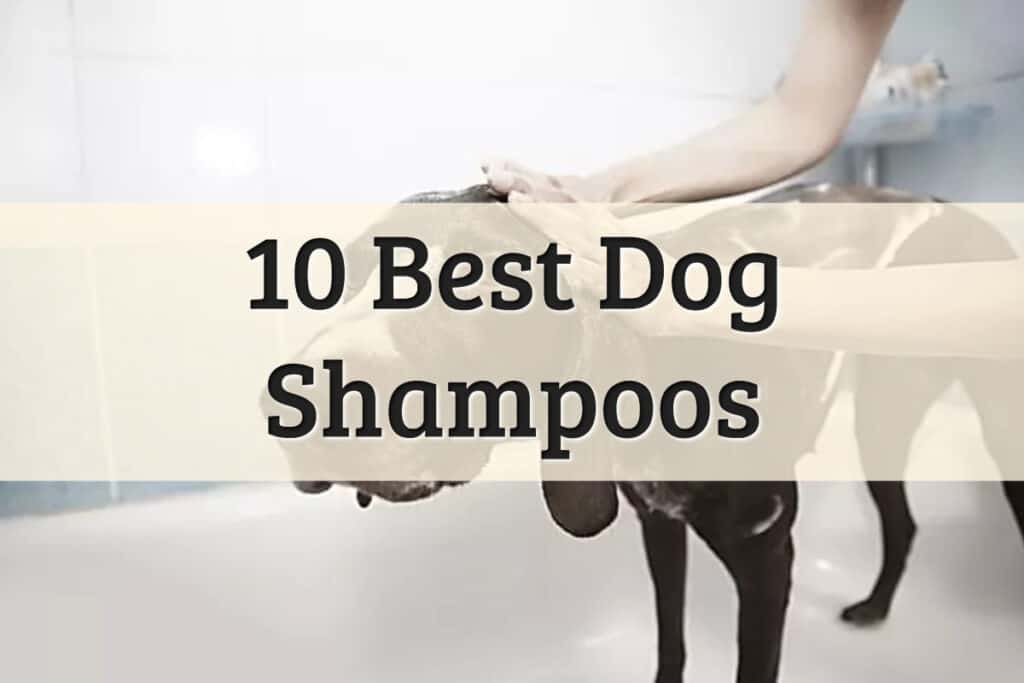 Check out the list of best dog shampoos feature image